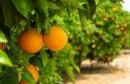 البرتقال 1